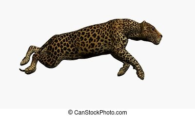 Leopard Running - Leopard running on a white background