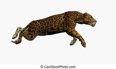 Jaguar Running - Jaguar running on a white background