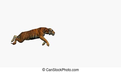 Tiger Running - Tiger running on a white background