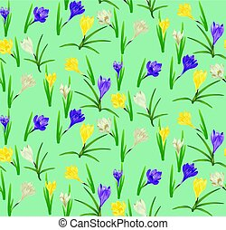 Colorful Crocus Flowers - Spring flowers, colorful blooming...