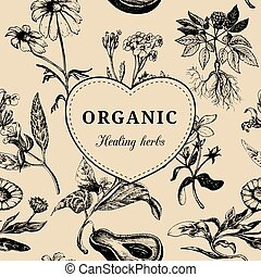 Hand drawn vector herbs. Officinalis, medicinal, cosmetic plants sketched illustration. Vintage floral card or poster.