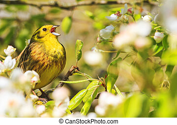 Song birds singing in the flowers in the trees