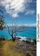 Black tree near blue sea at Dolphin point, Noosa heads,...