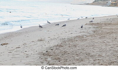 dog beach sand sea gulls - dog runs along the beach and...