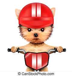 Adorable puppy sitting on a bike with helmet - Funny...