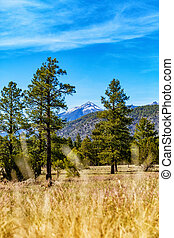 Flagstaff Arizona Park in Woods - Vertical - View from...