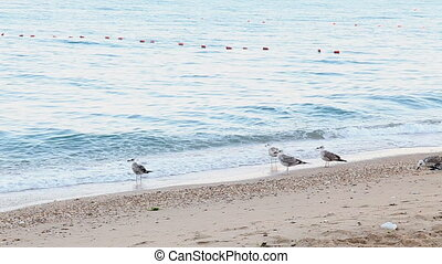 a flock of seagulls sea beach sand birds wait