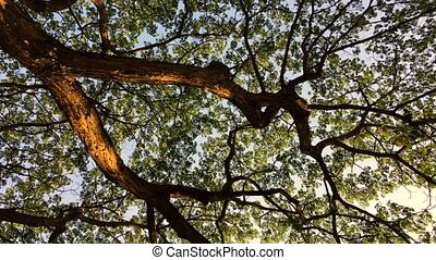 Tree and branches ant eye view - Rotage tree and branches...