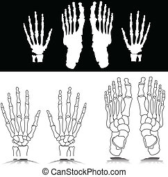 bone hand and foot illustration