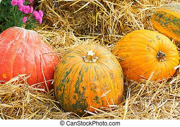 Pumpkin on hay background