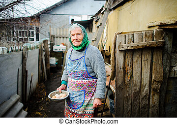 The elderly countrywoman gathers eggs in a hen house....