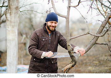 The young bearded man saws dry branches of fruit trees.
