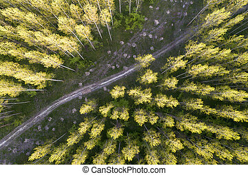 Forest landscape shoot from drone - Aerial image of...