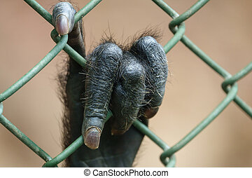 Monkey hand behind grille - Closeup of monkey hand behind...