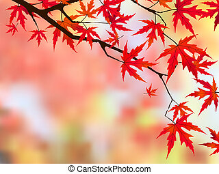 Japanese maple - Brilliant red leaves on a Japanese Maple...