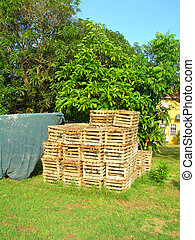 lobster pot traps in yard Big Corn Island Nicaragua - group...