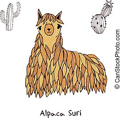 Alpaca suri hand drawn doodle vector illustration. - Alpaca...