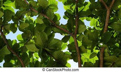 bright sunlight shining breaking through the foliage -...
