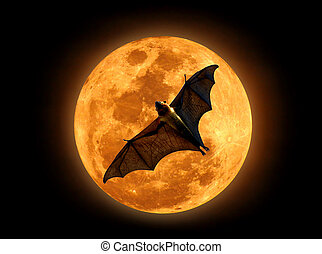Flying fox on the moon - Flying fox on the full moon in the...