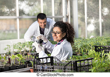 Engineers with seedlings in greenhouse