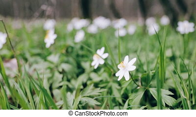 White flowers in the forest.