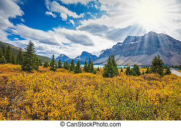 The yellow autumn vegetation round Bow Lake