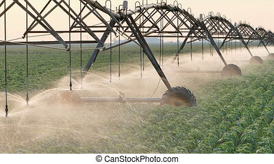 Soybean field watering - Soy bean field with Irrigation...