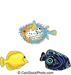 Tropical Fish - Tropical fish illustrations on white...