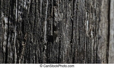 Old black wooden texture background.