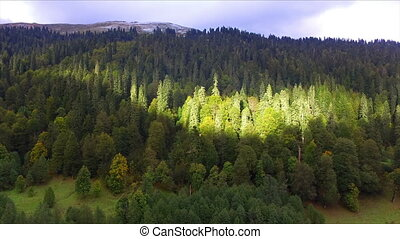Aerial view on wild mountain forest with spot of sunlight