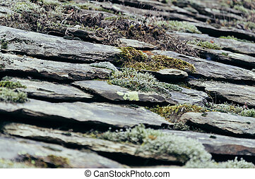 Roof slate detail with moss
