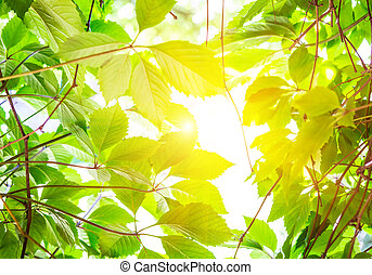 Green leaves in bright light background