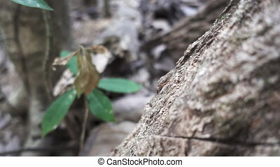 Ant walking over tree trunk in super slow-motion - Close up...