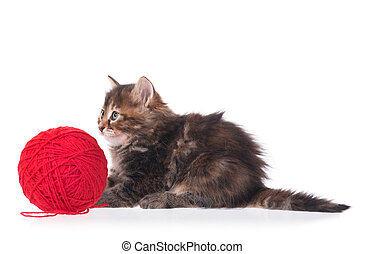Cute little kitten with ball of red threads on white...