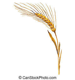 Wildflower ears of wheat in a watercolor style isolated.