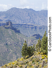 central Gran Canaria i April, flowering slopes and Roque...