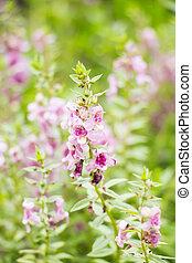 Close up purple flowers in field.