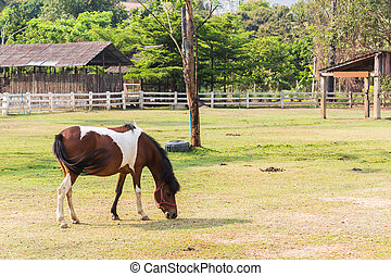 Horse in farm. Country landscape.