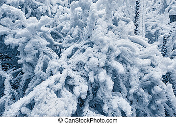 Frozen tree branches in Huangshan National park. China.