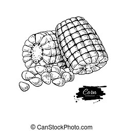 Corn hand drawn vector illustration. Isolated Vegetable...