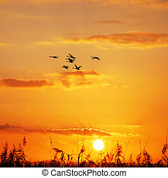 wild geese sunset - wild geese flying in the sky at sunset