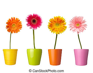 flower nature garden botany daisy bloom pot - collection of...