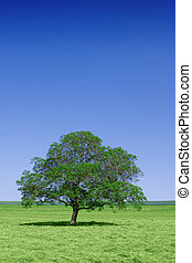 Lone green tree in nature