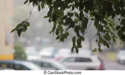 Rain pours down on branches of a tree. Blurred cars on the...