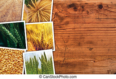 Wheat photo collage - Wheat farming photo collage on wooden...