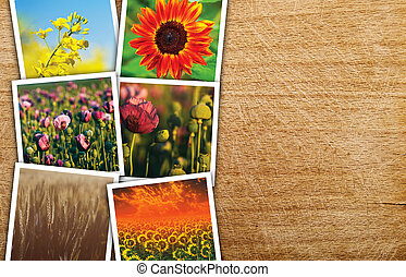 Agricultural crops photo collage on wooden background as...