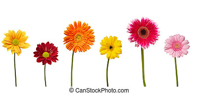 flower nature garden botany daisy bloom - collection of...