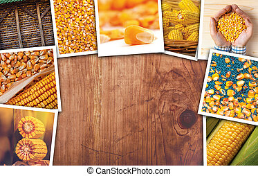 Corn in agriculture, photo collage with copy space