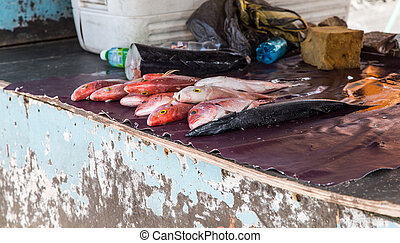 Fresh Fish on Deck of Boat