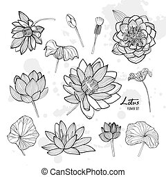 Set of lotus flower in different views. Bloomed, buds and leaves. Hand drawn contour illustrations collection